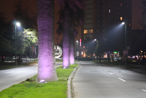Palmeras Playa brava Iqq iluminadas por Schreder