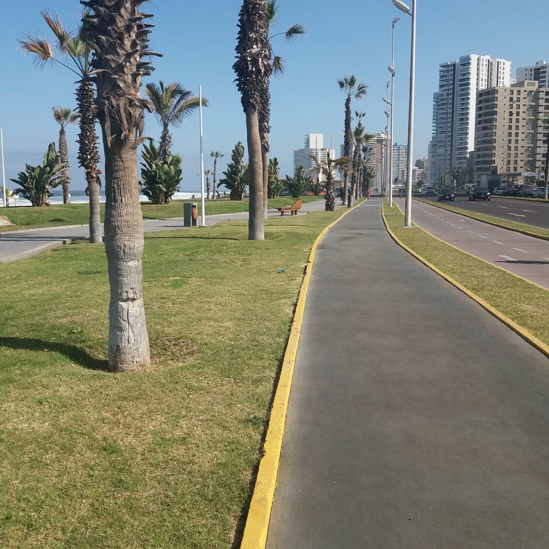 Palmeras Playa Brava Iqq iluminadas por schereder